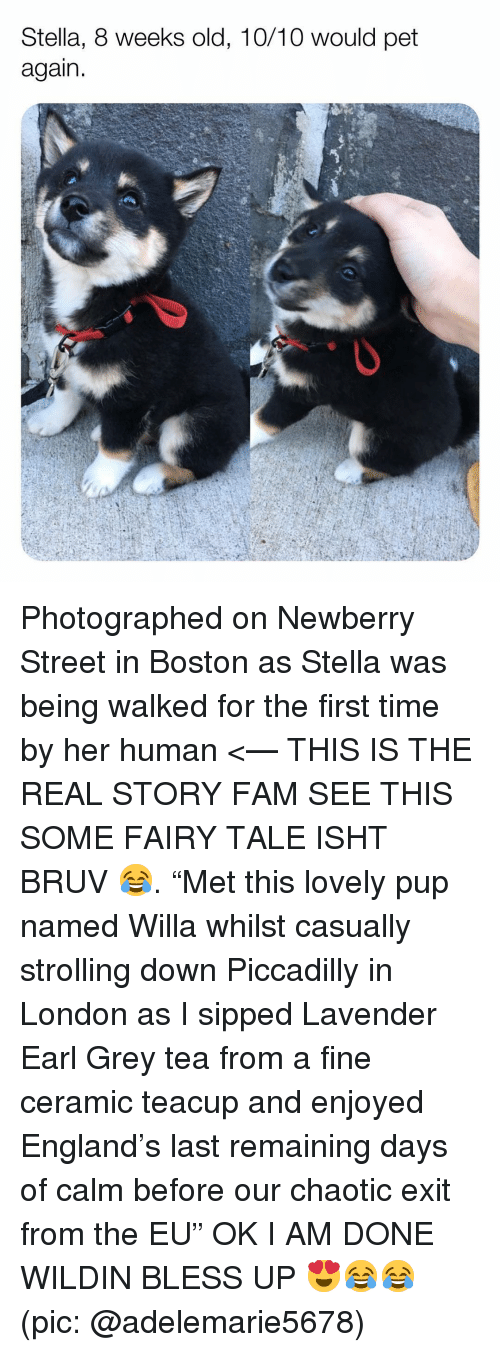 """Bless up: Stella, 8 weeks old, 10/10 would pet  again Photographed on Newberry Street in Boston as Stella was being walked for the first time by her human <— THIS IS THE REAL STORY FAM SEE THIS SOME FAIRY TALE ISHT BRUV 😂. """"Met this lovely pup named Willa whilst casually strolling down Piccadilly in London as I sipped Lavender Earl Grey tea from a fine ceramic teacup and enjoyed England's last remaining days of calm before our chaotic exit from the EU"""" OK I AM DONE WILDIN BLESS UP 😍😂😂 (pic: @adelemarie5678)"""