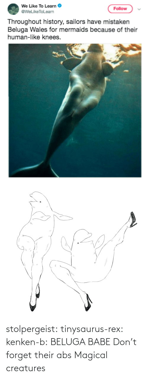 jpg: stolpergeist: tinysaurus-rex:  kenken-b: BELUGA BABE Don't forget their abs  Magical creatures