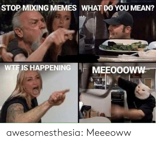 Memes, Tumblr, and Wtf: STOP MIXING MEMES WHAT DO YOU MEAN?  WTF IS HAPPENING  MEEOOOWW awesomesthesia:  Meeeoww
