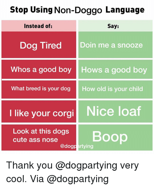 Ass, Corgi, and Cute: Stop Using Non-Doggo Language  nstead of  Say:  Dog Tired Doin me a snooze  Whos a good boy Hows a good boy  What breed is your dog  How old is your child  I like your corgi Nice loaf  Look at this dogs  cute ass nose  Boop  @dogpartying Thank you @dogpartying very cool. Via @dogpartying