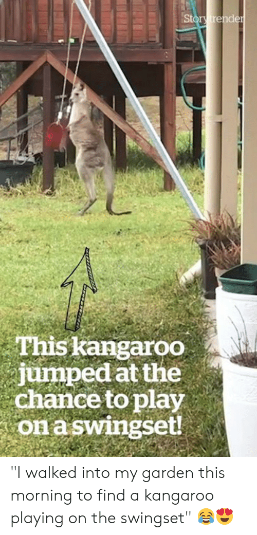 """Jumped, Kangaroo, and Play: Story trender  This kangaroo  jumped at the  chance to play  on aswingset! """"I walked into my garden this morning to find a kangaroo playing on the swingset"""" 😂😍"""