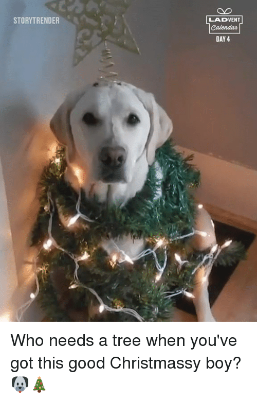 Dank, Good, and Tree: STORYTRENDER  LADVENT  DAY 4 Who needs a tree when you've got this good Christmassy boy? 🐶🎄