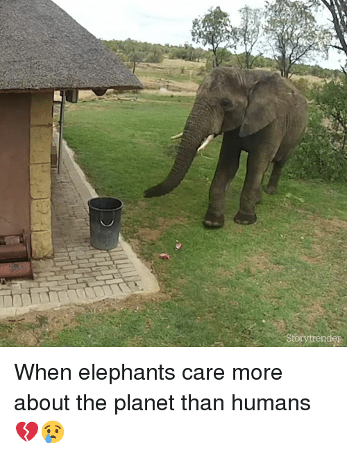 Elephants, Planet, and More: Storytrender When elephants care more about the planet than humans 💔😢