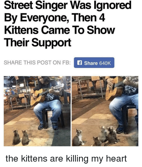 Heart, Kittens, and Singer: Street Singer Was lgnored  By Everyone, Then 4  Kittens Came To Show  Their Support  SHARE THIS POST ON FB  fShare 640K the kittens are killing my heart