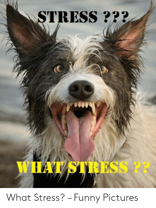 Funny Stress Memes: STRESS ?*?  WHAT STRESS ?? What Stress? – Funny Pictures