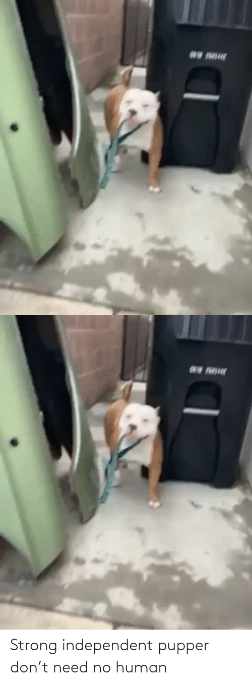 pupper: Strong independent pupper don't need no human