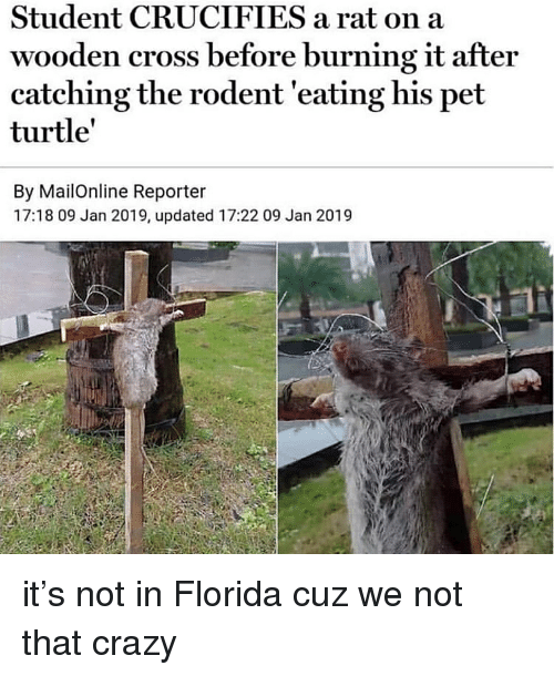 Mailonline: Student CRUCIFIES a rat on a  wooden cross before burning it after  catching the rodent 'eating his pet  turtle'  By MailOnline Reporter  17:18 09 Jan 2019, updated 17:22 09 Jan 2019 it's not in Florida cuz we not that crazy