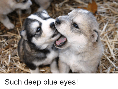 Memes, 🤖, and Deep: Such deep blue eyes!