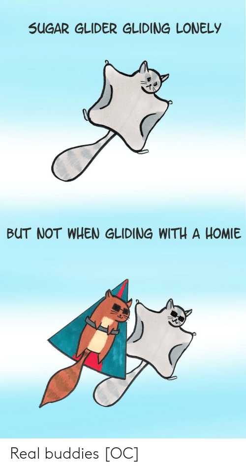 Homie, Sugar, and Sugar Glider: SUGAR GLIDER GLIDING LONELY  BUT NOT WHEN GLIDING WITH A HOMIE Real buddies [OC]