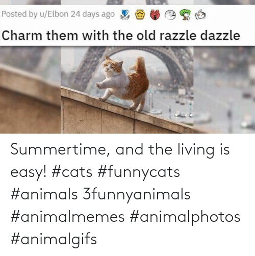 Cats: Summertime, and the living is easy! #cats #funnycats #animals 3funnyanimals #animalmemes #animalphotos #animalgifs