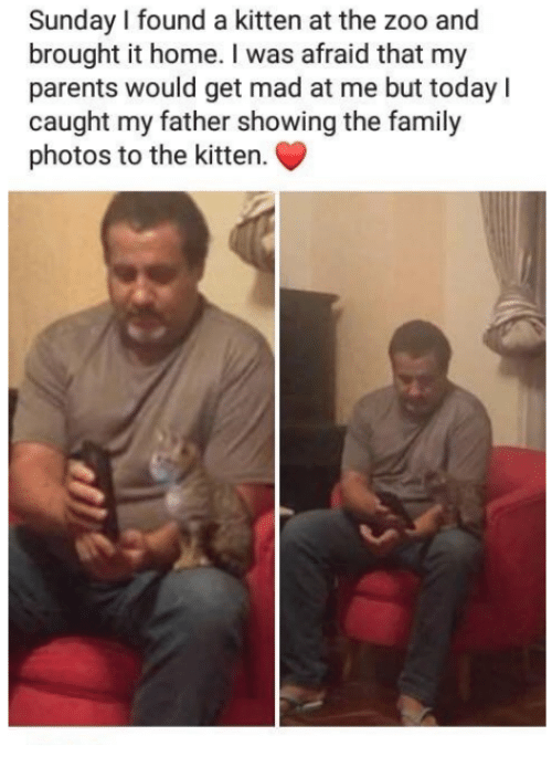 Mad At Me: Sunday I found a kitten at the zoo and  brought it home. I was afraid that my  parents would get mad at me but todayl  caught my father showing the family  photos to the kitten.