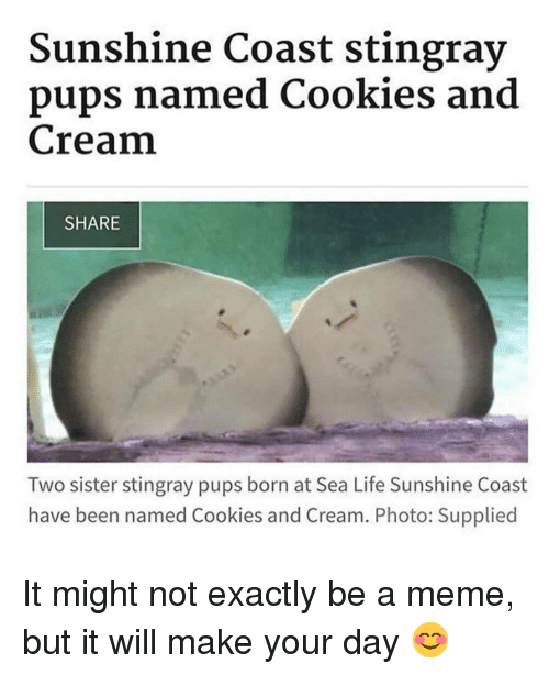 Cookies, Life, and Meme: Sunshine Coast stingray  pups named Cookies and  Cream  SHARE  Two sister stingray pups born at Sea Life Sunshine Coast  have been named Cookies and Cream. Photo: Supplied It might not exactly be a meme, but it will make your day 😊