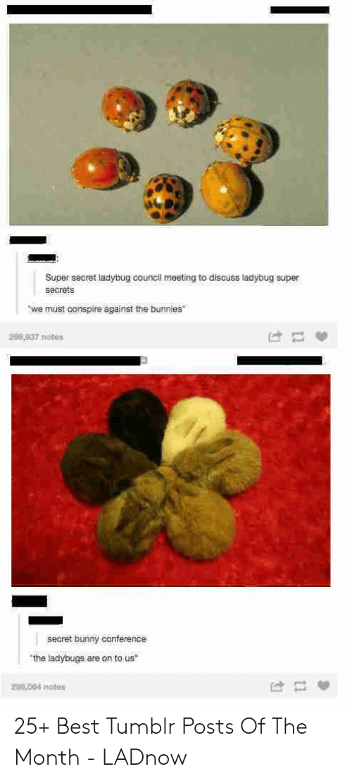 secrets: Super secret ladybug council meeting to discuss ladybug super  secrets  we must conspire against the bunnies  299,937 notes  secret bunny canference  the ladybugs are on to us  298,064 noten 25+ Best Tumblr Posts Of The Month - LADnow