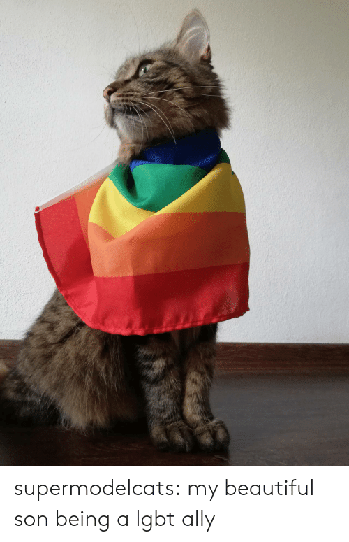 LGBT: supermodelcats:  my beautiful son being a lgbt ally