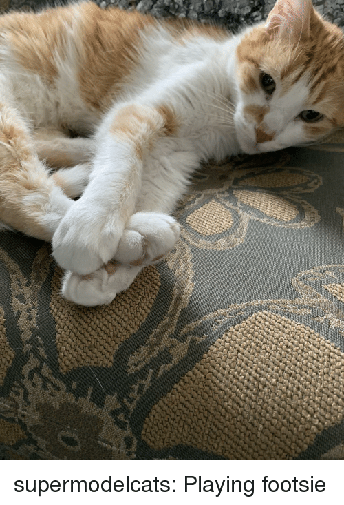 Tumblr, Blog, and Com: supermodelcats:  Playing footsie