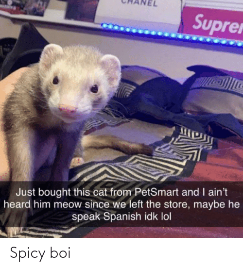Spanish: Suprer  Just bought this cat from PetSmart and I ain't  heard him meow since we left the store, maybe he  speak Spanish idk lol Spicy boi