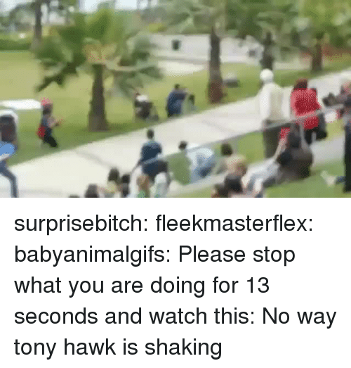 Target, Tony Hawk, and Tumblr: surprisebitch: fleekmasterflex:  babyanimalgifs: Please stop what you are doing for 13 seconds and watch this:  No way   tony hawk is shaking