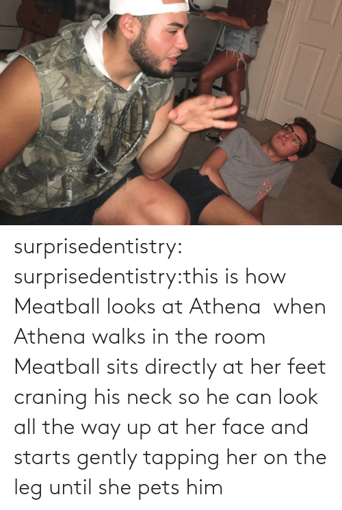 Pets: surprisedentistry:  surprisedentistry:this is how Meatball looks at Athena  when Athena walks in the room Meatball sits directly at her feet craning his neck so he can look all the way up at her face and starts gently tapping her on the leg until she pets him
