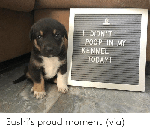 R: Sushi's proud moment (via)