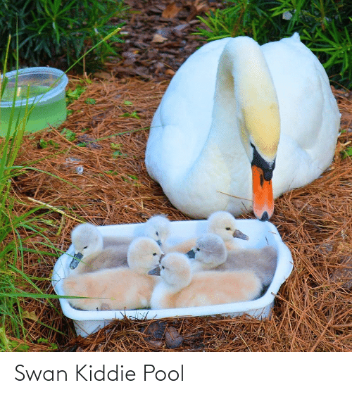 Pool: Swan Kiddie Pool
