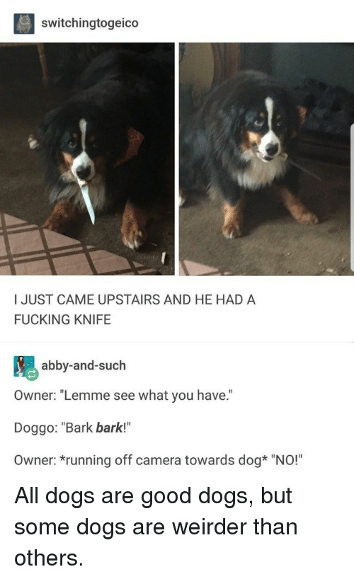 """Dogs, Fucking, and Camera: switchingtogeico  I JUST CAME UPSTAIRS AND HE HAD A  FUCKING KNIFE  abby-and-such  Owner: """"Lemme see what you have.  Doggo: """"Bark bark!""""  Owner: *running off camera towards dog* """"NO!"""" All dogs are good dogs, but some dogs are weirder than others."""