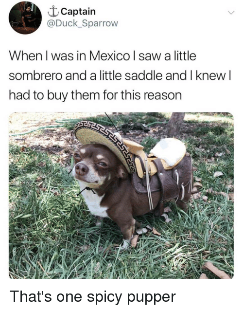 Memes, Saw, and Duck: t Captain  @Duck_Sparrow  When l was in Mexico I saw a little  sombrero and a little saddle and I knew l  had to buy them for this reason That's one spicy pupper