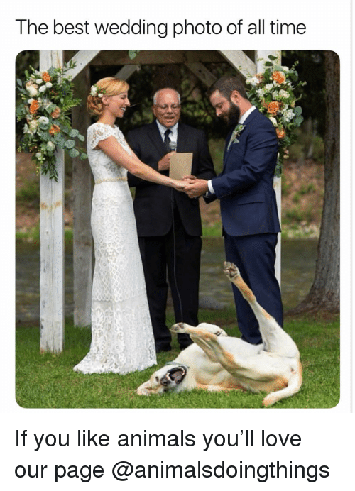 Animals, Love, and Best: T he best wedding photo of all time If you like animals you'll love our page @animalsdoingthings