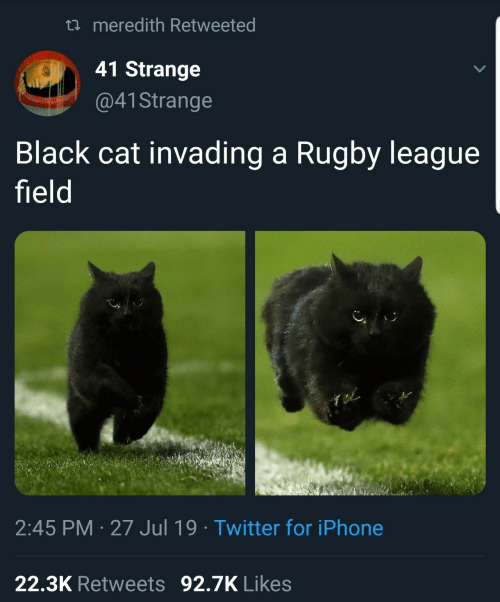 Iphone, Twitter, and Black: t meredith Retweeted  41 Strange  @41 Strange  Black cat invading a Rugby league  field  2:45 PM 27 Jul 19 Twitter for iPhone  22.3K Retweets 92.7K Likes