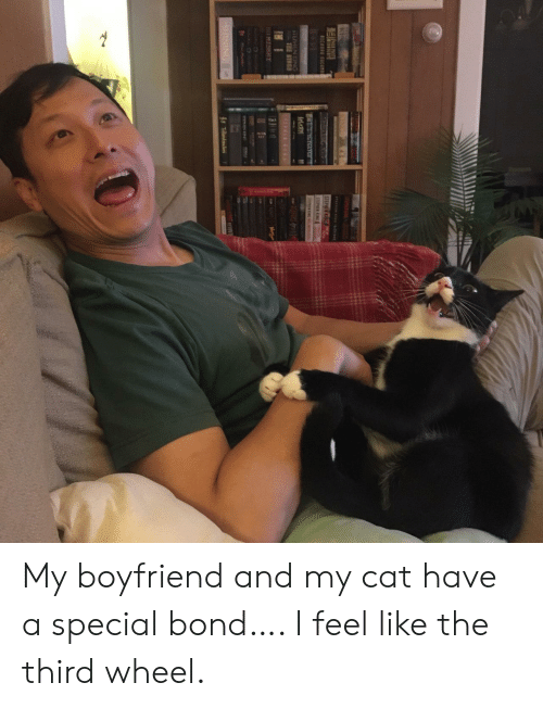 Stephen, Boyfriend, and Stephen King: T N NGt  STEPHEN K  STEPHEN N  NIC  PNONG  STEPHEN KING  TRE BTR  KING  EPAI L  MISHHY  SE  STEME  SHINING  SP  Tk My boyfriend and my cat have a special bond…. I feel like the third wheel.
