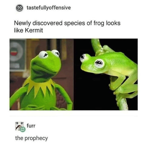 The Prophecy: t tastefullyoffensive  Newly discovered species of frog looks  like Kermit  furr  the prophecy