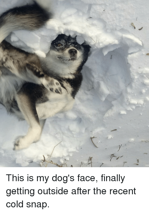 Dog Faces: T  y This is my dog's face, finally getting outside after the recent cold snap.