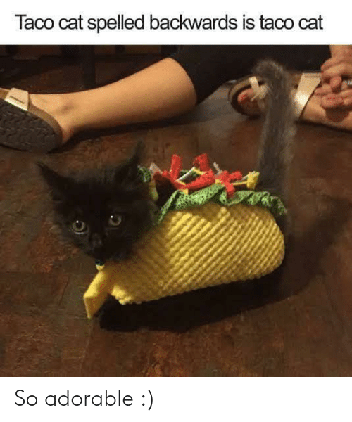 So Adorable: Taco cat spelled backwards is taco cat So adorable :)