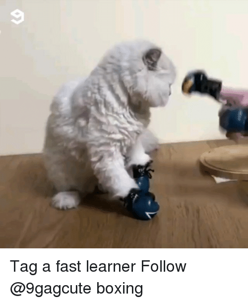 Boxing, Memes, and 🤖: Tag a fast learner Follow @9gagcute boxing