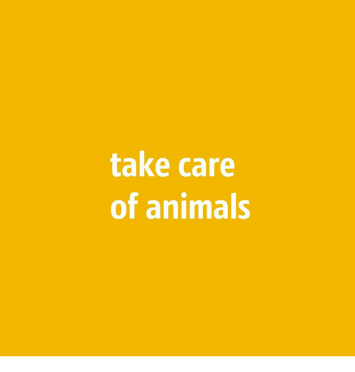 Animals, Take Care, and  Care: take care  of animals