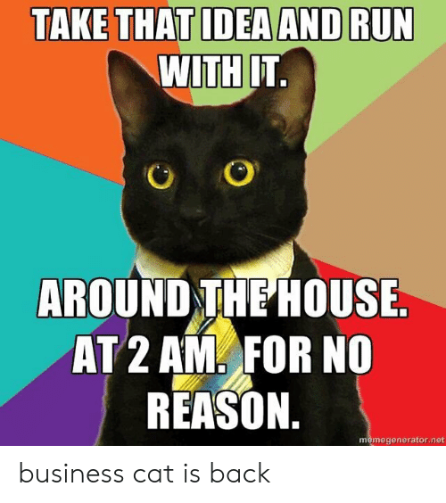 Run, Business, and House: TAKE THAT IDEA AND RUN  WITH IT.  AROUND THE HOUSE.  AT 2 AM FOR NO  REASON.  memegenerator.net business cat is back