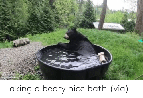 Nice: Taking a beary nice bath (via)