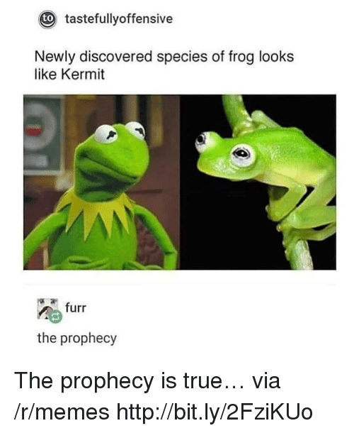 The Prophecy: tastefullyoffensive  to  Newly discovered species of frog looks  like Kermit  furr  the prophecy The prophecy is true… via /r/memes http://bit.ly/2FziKUo