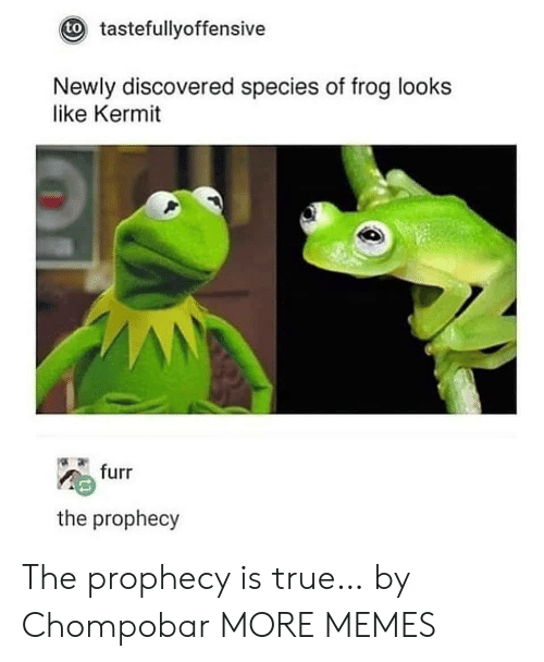 The Prophecy: tastefullyoffensive  to  Newly discovered species of frog looks  like Kermit  furr  the prophecy The prophecy is true… by Chompobar MORE MEMES