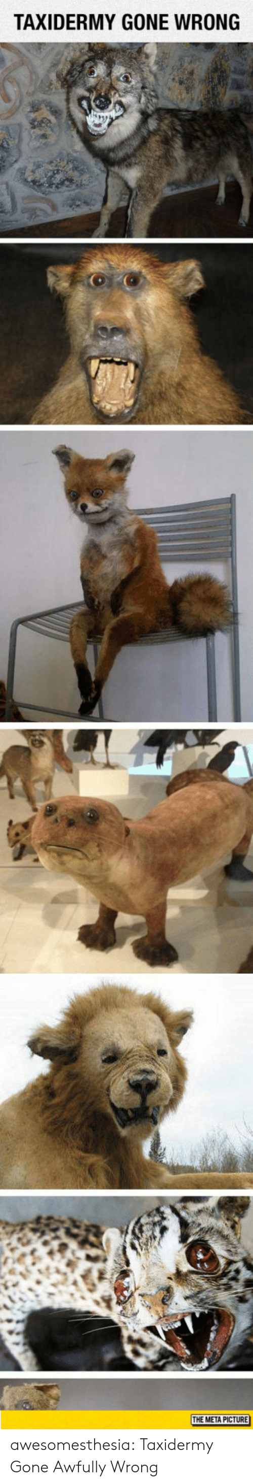 Gone Wrong: TAXIDERMY GONE WRONG  THE META PICTURE awesomesthesia:  Taxidermy Gone Awfully Wrong