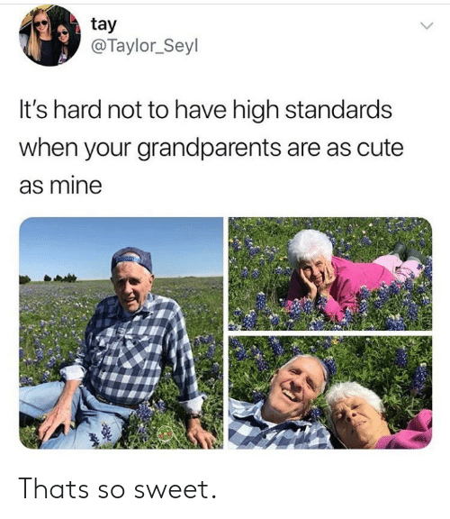 Cute, Mine, and Taylor: tay  @Taylor_Seyl  It's hard not to have high standards  when your grandparents are as cute  as mine Thats so sweet.