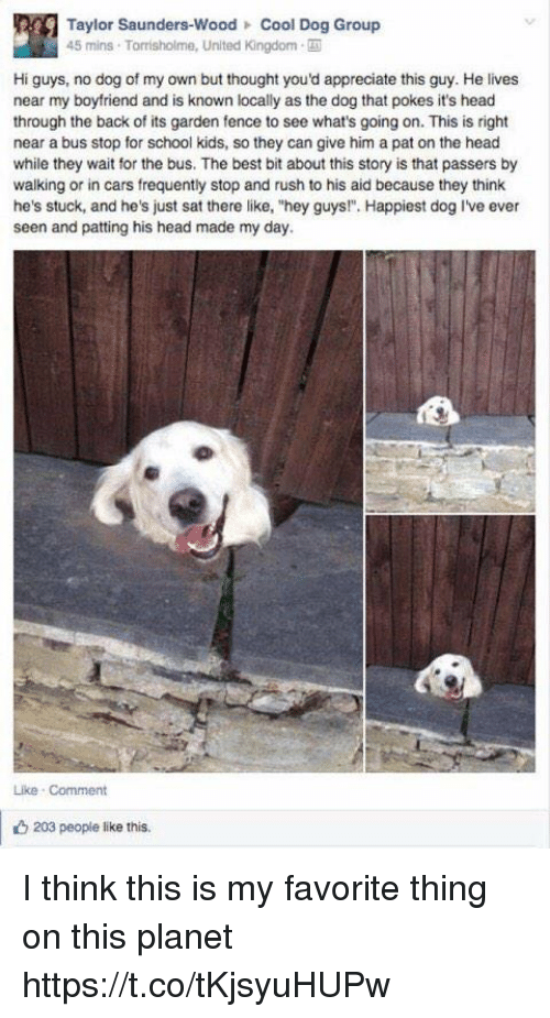 """Backes: Taylor Saunders-Wood Cool Dog Group  45 mins Torrisholme, United Kingdom-  Hi guys, no dog of my own but thought you'd appreciate this guy. He lives  near my boyfriend and is known locally as the dog that pokes it's head  through the back of its garden fence to see what's going on. This is right  near a bus stop for school kids, so they can give him a pat on the head  while they wait for the bus. The best bit about this story is that passers by  walking or in cars frequently stop and rush to his aid because they think  he's stuck, and he's just sat there like, """"hey guys!"""". Happiest dog I've ever  seen and patting his head made my day.  Like Comment  203 people like this. I think this is my favorite thing on this planet https://t.co/tKjsyuHUPw"""
