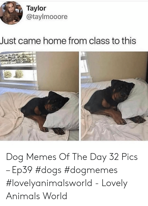 Animals, Dogs, and Memes: Taylor  @taylmooore  Just came home from class to this Dog Memes Of The Day 32 Pics – Ep39 #dogs #dogmemes #lovelyanimalsworld - Lovely Animals World