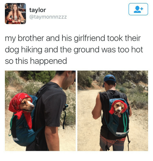 Girlfriend, Dog, and Brother: taylor  @taymonnnzzz  my brother and his girlfriend took their  dog hiking and the ground was too hot  so this happened