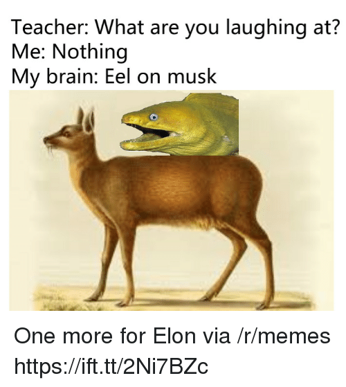 Memes, Teacher, and Brain: Teacher: What are you laughing at?  Me: Nothing  My brain: Eel on musk One more for Elon via /r/memes https://ift.tt/2Ni7BZc