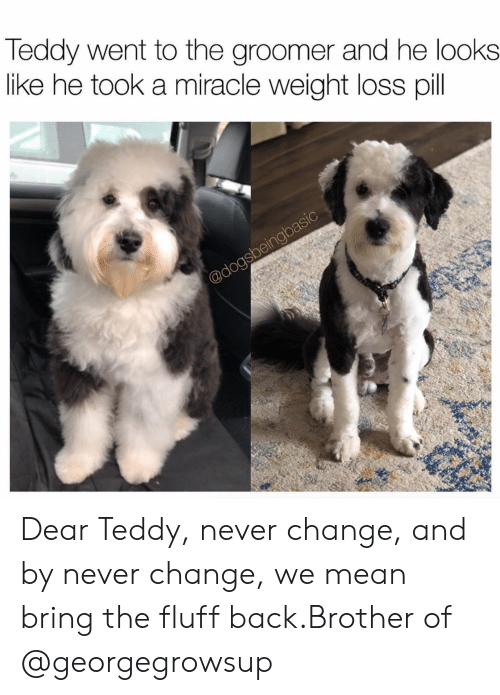 pil: Teddy went to the groomer and he looks  like he took a miracle weight loss pil Dear Teddy, never change, and by never change, we mean bring the fluff back.Brother of @georgegrowsup