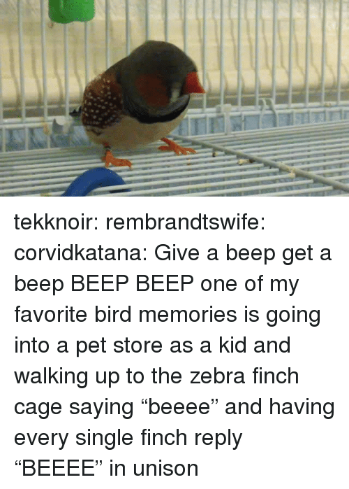 """zebra: tekknoir:  rembrandtswife:  corvidkatana:  Give a beep get a beep   BEEP BEEP  one of my favorite bird memories is going into a pet store as a kid and walking up to the zebra finch cage saying """"beeee"""" and having every single finch reply """"BEEEE"""" in unison"""