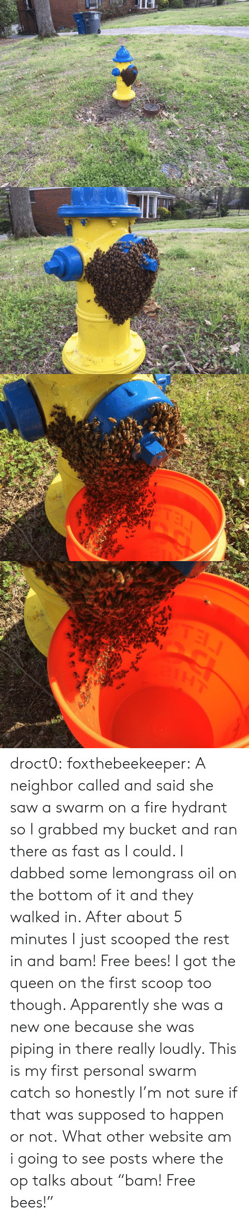"Bucket: TEL droct0: foxthebeekeeper:  A neighbor called and said she saw a swarm on a fire hydrant so I grabbed my bucket and ran there as fast as I could. I dabbed some lemongrass oil on the bottom of it and they walked in. After about 5 minutes I just scooped the rest in and bam! Free bees!  I got the queen on the first scoop too though. Apparently she was a new one because she was piping in there really loudly. This is my first personal swarm catch so honestly I'm not sure if that was supposed to happen or not.   What other website am i going to see posts where the op talks about ""bam! Free bees!"""
