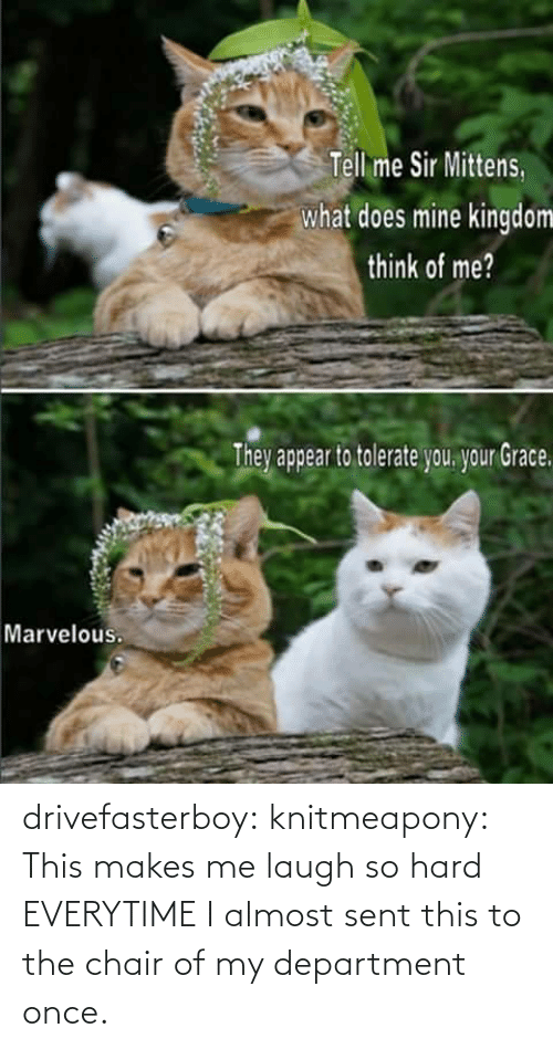 Me Sir: Tell me Sir Mittens.  what does mine kingdom  think of me?  Thev appear to tolerate vou vour Grace  Marvelous. drivefasterboy:  knitmeapony:  This makes me laugh so hard EVERYTIME  I almost sent this to the chair of my department once.