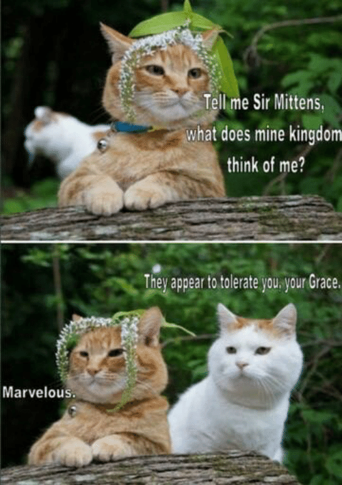 Me Sir: Tell me Sir Mittens,  what does mine kingdom  think of me?  They appear to tolerate you. your Grace.  Marvelous.