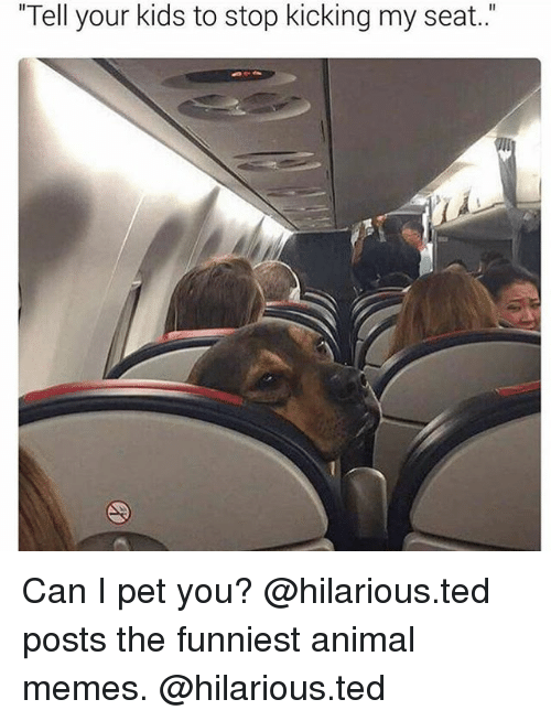 """Funniest Animal: """"Tell your kids to stop kicking my seat."""" Can I pet you? @hilarious.ted posts the funniest animal memes. @hilarious.ted"""
